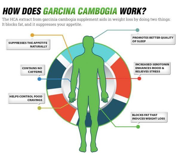 does garcinia cambogia work
